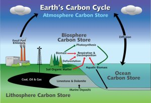 Life Is Science Is Life: The Carbon Cycle