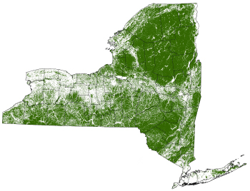 Forests in New York State