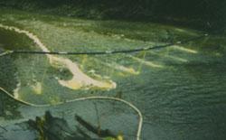 Liquid TFM applied to a stream during a lamprey control treatment.