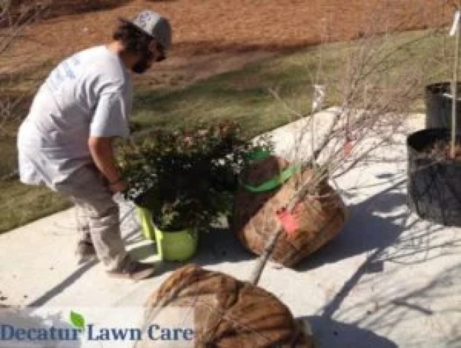 Decatur Lawn Care installing plants to finish off spring yard clean up for local home
