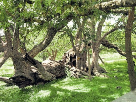 A peek into the State's biodiversity heritage site