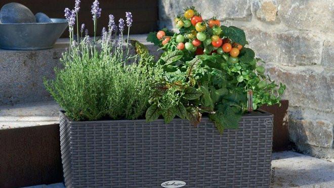 que planter dans ses jardinieres d ete