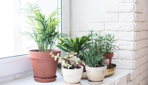 deco jardin et jardinage entretien
