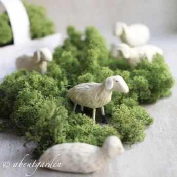 Aboutgarden Moutons et mousse
