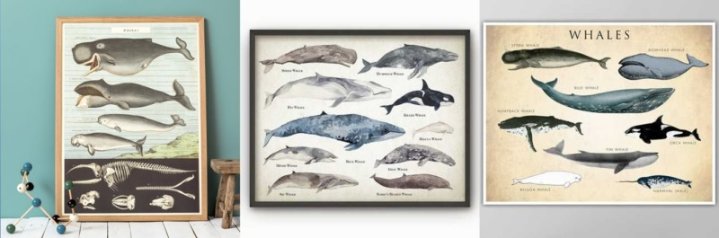 selection_Atouslesetages_affiches_baleines_especes