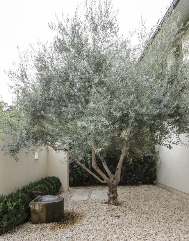 Weekly Crush... : jardin minimaliste et olivier | @decocrush - www.decocrush.fr