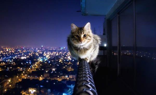 cat_decofairy
