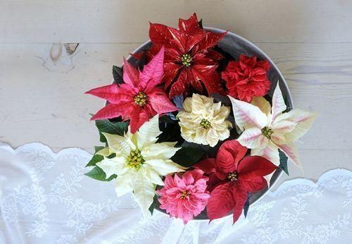 decorar la navidad facil flor de pascua