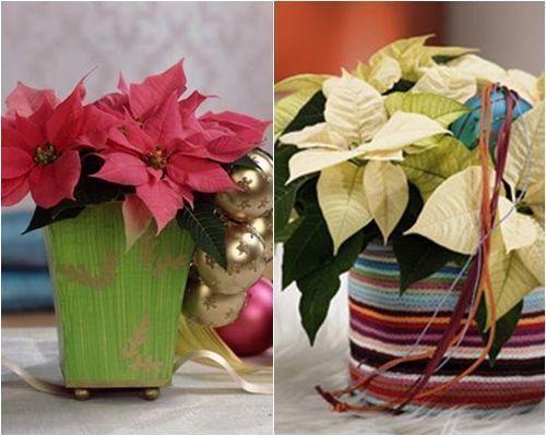 Decoracion navideña con flor de pascua de estilo vintage 4