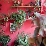 Decoración de interiores: ¡atentos a la tendencia Junglalandia…!