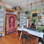 Decoración de interiores ¡atentos a la tendencia Junglalandia...! 2