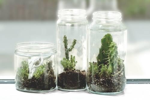 Hacer terrarios de plantas crasas con tarros de cristal 4