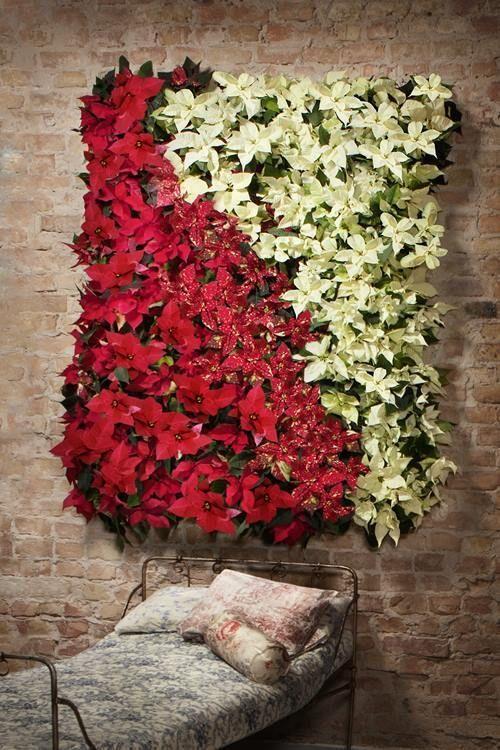 Jardín vertical casero con flor de Pascua 6