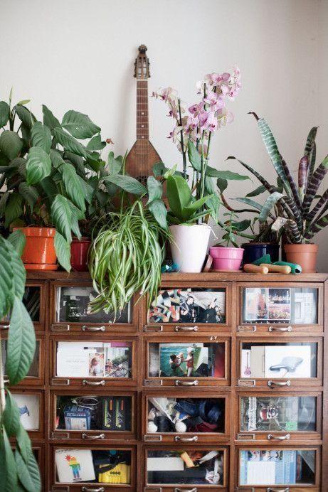 ¡Mi casa, mi selva! 20 ideas para decorar con plantas de interior 9