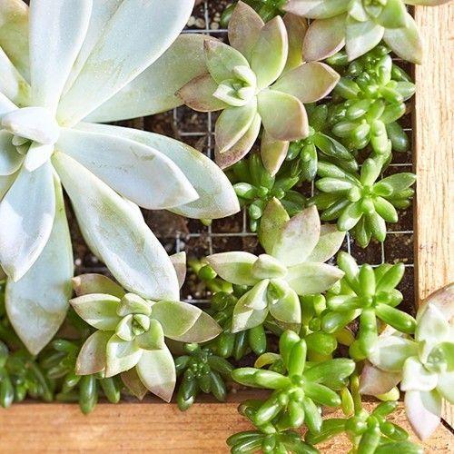 Decorar terrazas pequeñas mini jardín vertical de plantas crasas 9