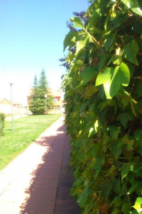 Herramientas de jardinería para podar fácilmente setos y trepadoras 10