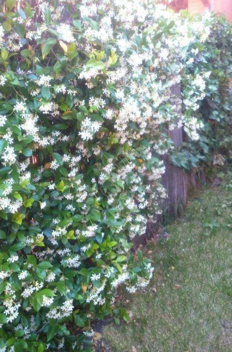 Herramientas de jardinería para podar fácilmente setos y trepadoras 11