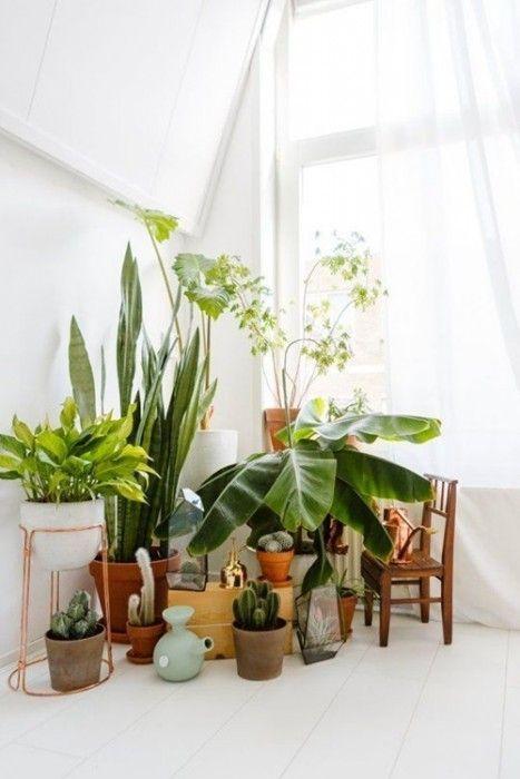 Los 25 rincones con plantas de interior más bellos de Pinterest 11