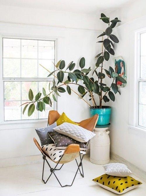 Los 25 rincones con plantas de interior más bellos de Pinterest 13