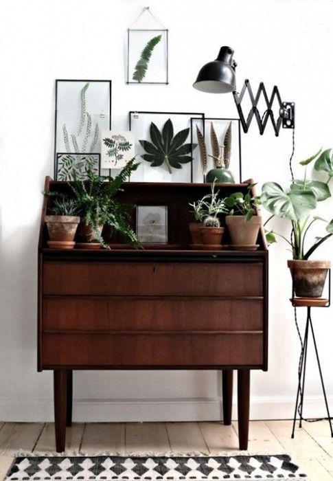 Los 25 rincones con plantas de interior más bellos de Pinterest 8