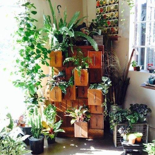 Los 25 rincones con plantas de interior más bellos de Pinterest 9