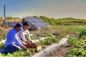 ¿Qué tan viable es autogenerar energía en el campo?