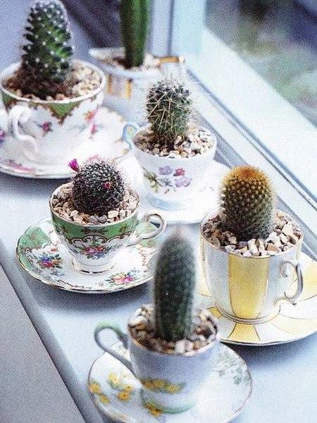 Cactus Decor Ideas Home Decor Trend Ideas