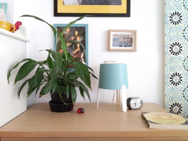 plantas vivas para decorar - espatifilo