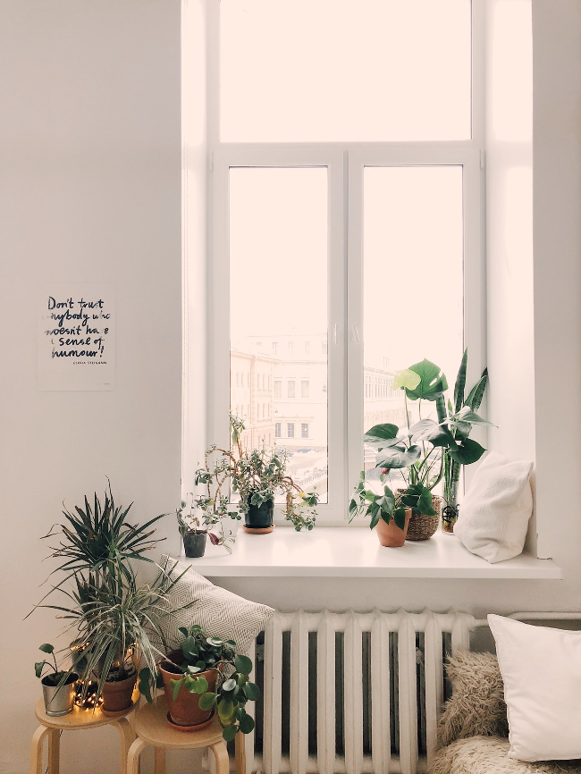 ventanas desnudas y plantas de interior son distintivos del estilo nórdico