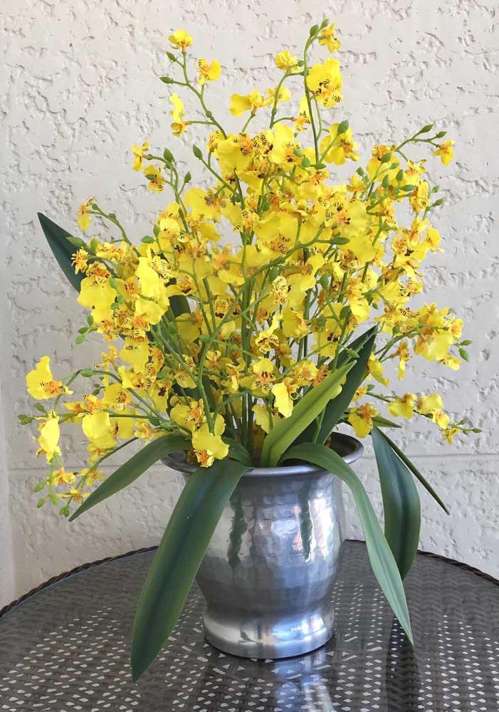 Orquídea Chuva de Ouro: essas orquídeas são cientificamente conhecidas como Oncidium, um gênero que passa de 600 espécies catalogadas
