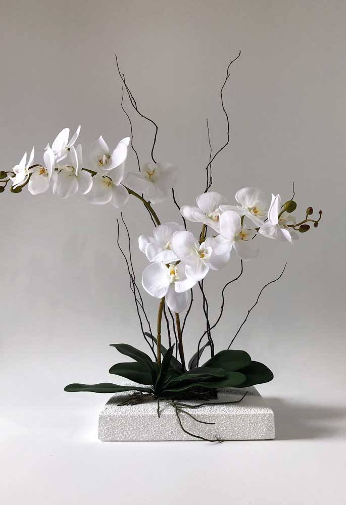 A Phalaenopsis Branca se destaca ainda por exigir cuidados relativamente simples de cultivo e por se adaptar muito bem a locais fechados e com pouca luz, ou seja, se tornando uma ótima opção para dentro de casa