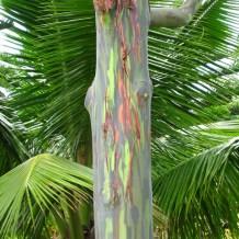Beautiful tree in Maui