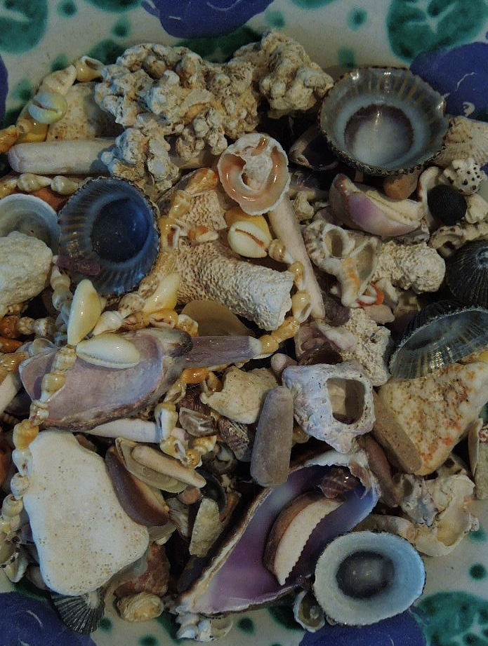 how to clean sea shells for display