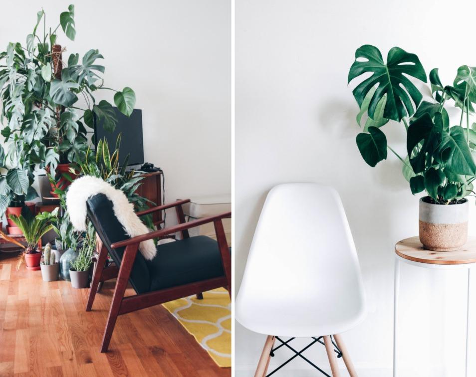 roślinne-dekoracje-wnętrz-żywe-rośliny-w-aranżacjach