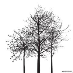 Kształt drzewa bez liści na białym tle