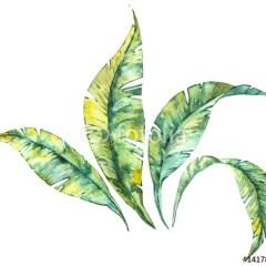 liście-bananowca-akwarela-domowe-biuro