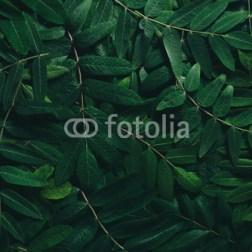 przyroda-kompozycja-z-liści-fototapeta
