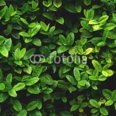 fototapeta-zielone-liscie-dekoracje-do-lazienki