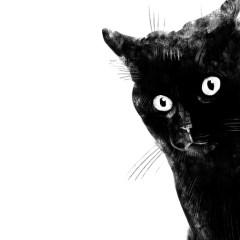 czarny-kociak-ilustracja-minimalizm-plakat-na-sciane-natalia-lach