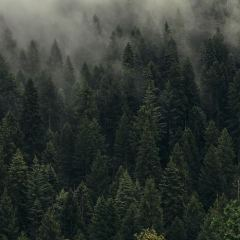 ciemny-las-we-mgle-w-górach-obraz-pejzaż