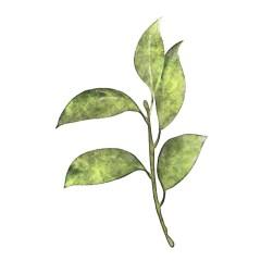 tropikalne-rosliny-plakat-na-sciane-naklejka-dom