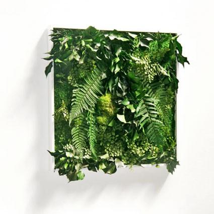 MATIGREEN - Tableau végétal stabilisé