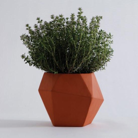 pots herbes aromatiques Herb  Nick Fraser