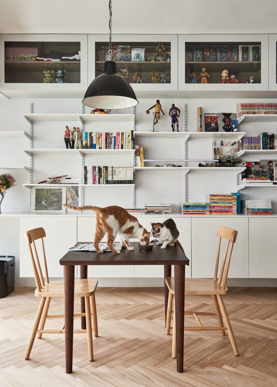decorer votre appartement si vous avez des chats