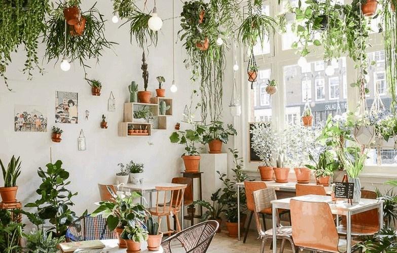 7 plantes dépolluantes qui aident à la purification de l'air pour assainir votre maison