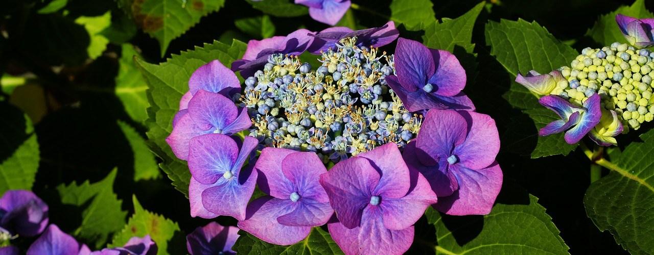 5 plus belles plantes à cultiver dans son jardin