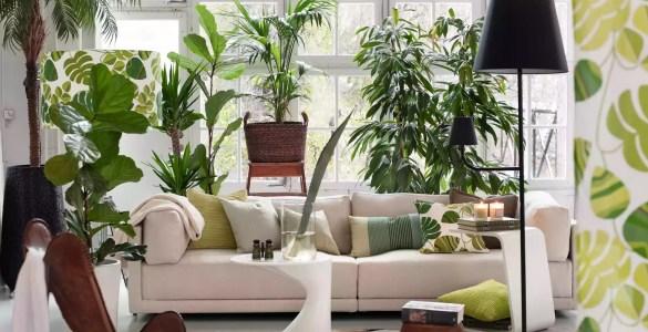 plantes Feng Shui