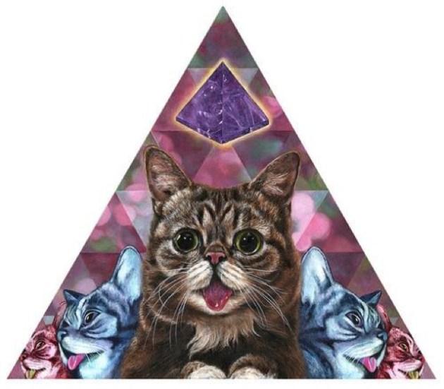 gatos lsd 09