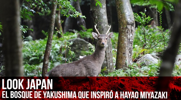 look japan yakushima portada