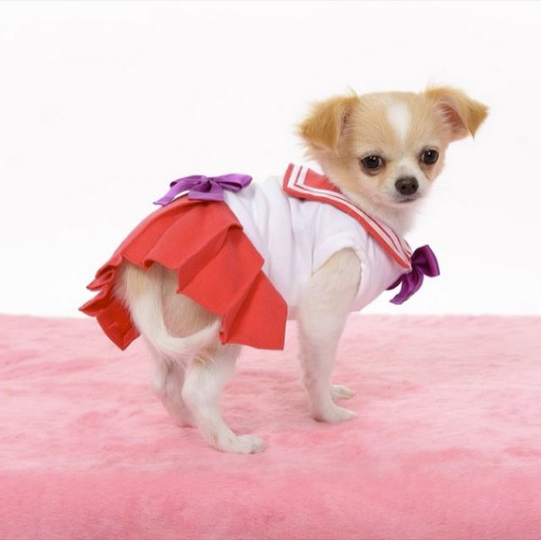 Sailor-moon-dog-cosplay-03
